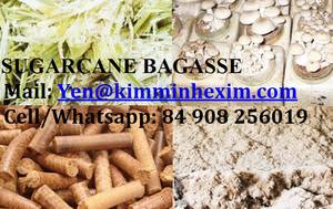 Wholesale Agricultural Waste: Suggarcane Bagasses for Mushroom Cultivation