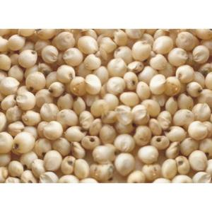 Wholesale beverage bag: Quality White Sorghum