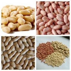 Wholesale vacuum pack storage bags: Peanut Kernels/Blanched Peanuts/Peanuts in Shell