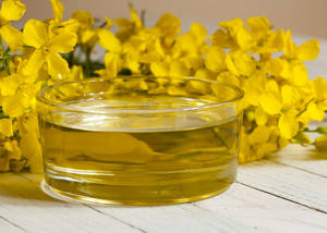 Wholesale rapeseed oil: Premium Quality Crude / Refined Canola Oil / Rapeseed Oil Manufacture