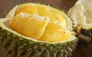 Wholesale exporter: High Quality Fresh Durians for Export