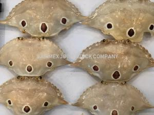 Wholesale food decoration: Crab Shells, Clam Shell for Food or Decorations