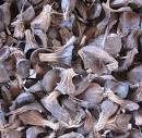 Palm Kernel Shells Available