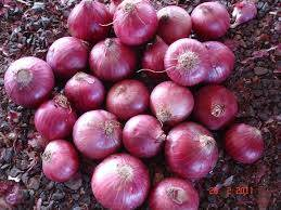 Wholesale onions: Red Onions