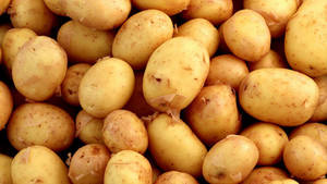 Wholesale fresh potatoes: Fresh Potato