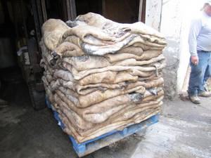Wholesale animal hides: Animal Hide