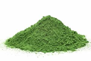 Wholesale moringa powder: Moringa Powder