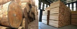 Wholesale Timber: Timber Wood