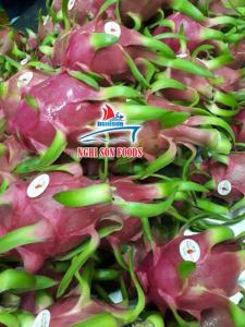 Wholesale Other Fruit: Dragon Fruit