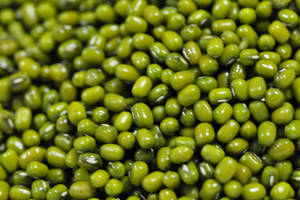 Wholesale price for red lentils: Quality Green Mung Beans