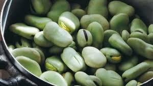 Wholesale export quality: Export High Quality Green Broad Beans