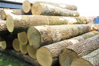 Sell Beech logs