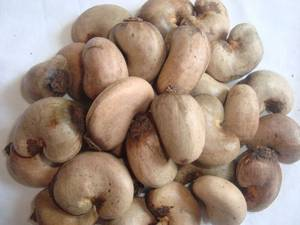 Wholesale salted cashew: Cashew Nuts (Raw) Roasted & Salted Cashews.