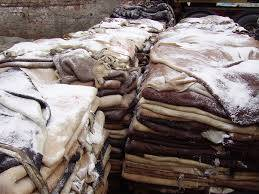 Wholesale salted hides: 100% Wet and Salted Donkey Hides and Cow Hides for Sell