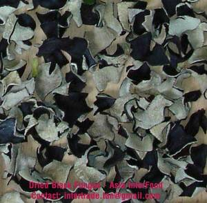 Wholesale dried mushroom: Dried Black Fungus Mushroom (Whole)