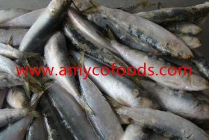 Frozen Sardines Fish High Quality and Low Price