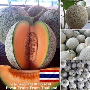 Wholesale melon: Fresh Musk Melon , HEALTHY FRESH SWEET HAMI MELON in THAILAND