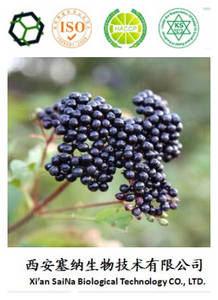 Wholesale maqui berry extract: Lose Weight Ingredient REAL100% Organic Maqui Berry Extract