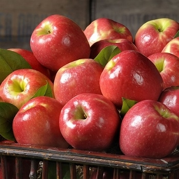 Sell Pome Fruit Fresh Red Delicious Apple Premium Apple