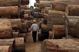 Wholesale timber: Timber