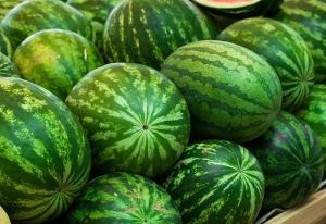 Wholesale Melons: Water Melon Fresh Water Melon/Fresh Melons/ Fresh Watermelon for Sale