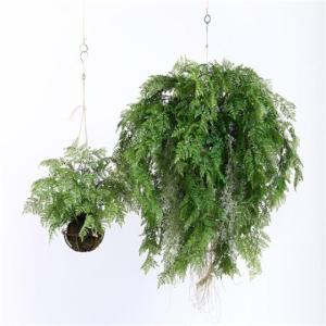 Wholesale fern: Artificial Hanging Ferns