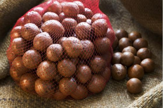 Sell Macadamia Nuts in Shell