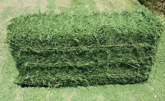 Sell Fresh Green Alfalfa Hay Bales