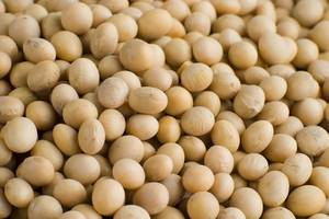 Wholesale soya bean: Soybeans /Soya Bean (8.0mm) with High Quality