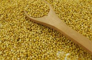 Wholesale birds: Yellow Millet in Husk for Bird Feeds