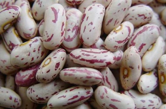 Light Speckled Kidney Beans  - Dried Pinto Beans LSKB
