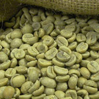 Robusta Coffee Beans - Best Quality and Price - FREE SAMPLES