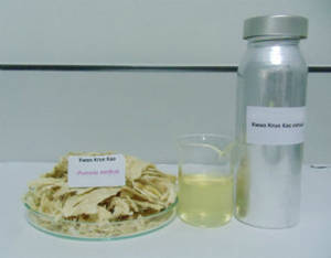 Wholesale breast enhancer: Pueraria Mirifica Extract, Breast Enhancer Herb