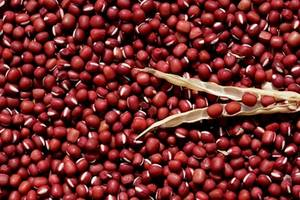Wholesale Mung Beans: Red Bean