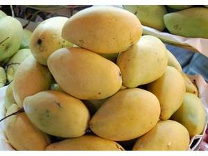 Wholesale fresh mango: Fresh Mango