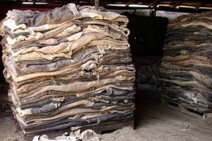 Wholesale wet salted donkey hide: Dry & Wet Salted Donkey Hides