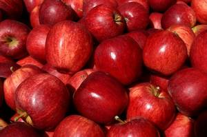 Wholesale gala: Fresh Royal Gala, Fuji, Golden Delicious, Red Delicious Apples