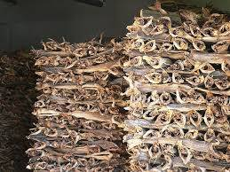 Sell Quality stockfish Head for sale/best food and dried stock fish
