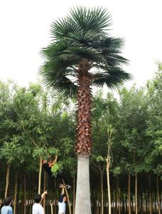 Wholesale tree: Artificial Washington Palm Tree