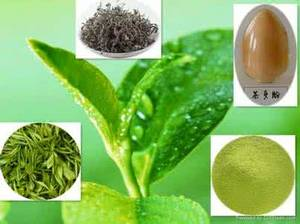 Wholesale green tea: Green Tea Extract Tea Polyphenol Catechin EGCG