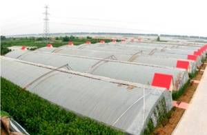 Wholesale solar greenhouses: Solar Greenhouse (BZ-SG-1402)