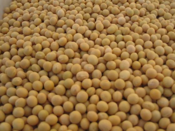 Sell Soya Beans For Sale