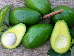 Wholesale avocado: Fresh Avocado - Best Seller in VietNam