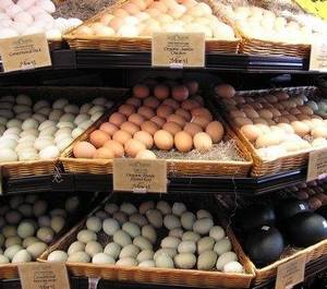 Wholesale africa grey parrot: Exotic Birds, Parrots, Africa Grey Parrot,Broiler Hatching Eggs Cobb 500 and 308 Healthy Eggs, Parr