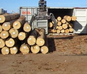 Wholesale Logs: Radiata Pine Logs - A Grade