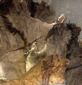 Wholesale Fur: Wet Salted and Dried Donkey Hides/Goat Skin / Salted Cow Hides
