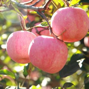 Wholesale fresh apple: Fresh Fuji Apple