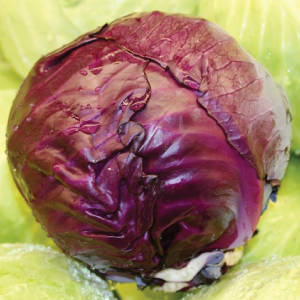 Wholesale Fresh Cabbages: Cabbage