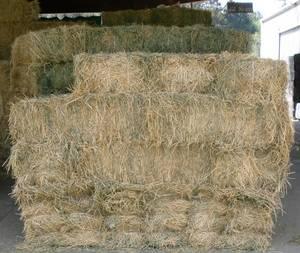 Wholesale mid: Buy Rhodes Grass Hay and Alfalfa Hay
