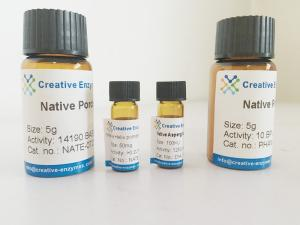 Wholesale beer brewing: Neutral Protease for Beer Brewing (Food Grade)